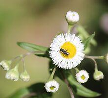 Wild Flower by DebbieCHayes