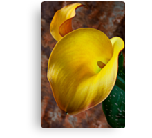Yellow Calla Lilly  Canvas Print