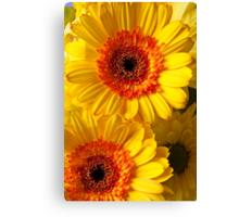Two Yellow Orange Mums Canvas Print