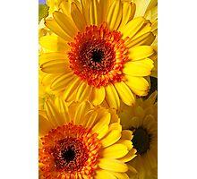 Two Yellow Orange Mums Photographic Print