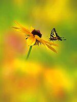Mellow Yellow by John Poon
