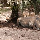 White Rhino by Gronde Photography