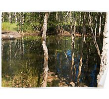 Water hole near Nourlangie Poster