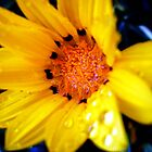 Yellow daisy by debra123