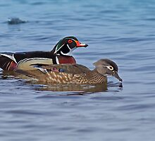 Pair of Wood Ducks by Bill McMullen