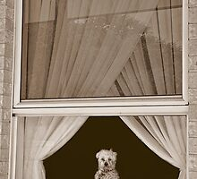 Oh!  Look At That Doggie In The Window!!! by JaninesWorld
