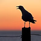 Vocal Seagull by pennyswork