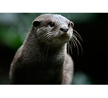 Curiousity killed the Otter Photographic Print