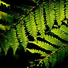 New Zealand Fern by Bryony Griffiths