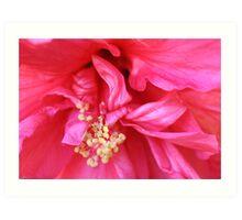 One Hot Pink Flower Art Print