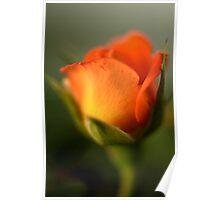 Sunburnt Rose Poster
