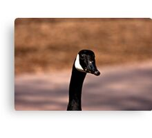 What a Honker Canvas Print