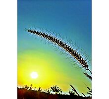 Grass spike with seeds in front of setting sun Photographic Print