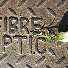 Fibre Optic (mistletoe on metal) by armadillozenith