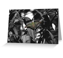 Tailed jay - selective colour Greeting Card