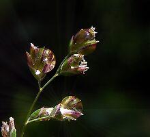 I am sending you drops of sunshine  by Yool