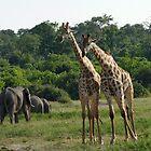 Africa Panarama by Travis Graham