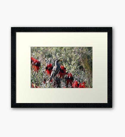 In the Desert Bloom Framed Print
