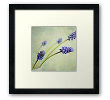 Hyacinth Grape Framed Print