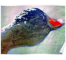 Red beak Poster