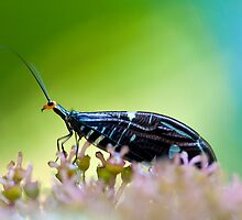 Buggie by Sandy  Taylor Photography