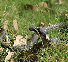 Snake In The Grass by Freelance Phil