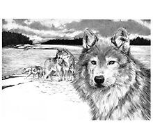 Wolves at Rainey Lake Photographic Print