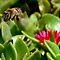 Order - Hymenoptera