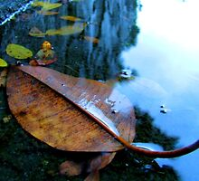 lifeless leaf by mark thompson