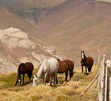 Horses & Mountains by Gabriel Skoropada