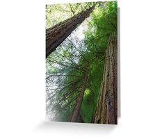 Through the Canopy Greeting Card