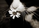 miss daisy by Ingz