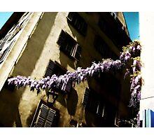 Wisteria-Strasbourg, France Photographic Print