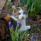 Nellie - Relaxing in the Garden I by vbk70