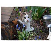 Nellie - Relaxing in the Garden I Poster