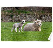 Exmoor`s New Born Lamb,2 Poster