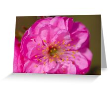Almond Blossoms II Greeting Card