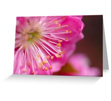 Almond Blossoms III Greeting Card