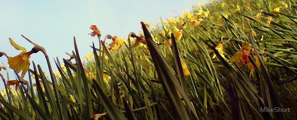 Dilly Dilly Daffies by MikeShort