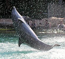 dolphin leaping by pamtrezise