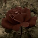 Victorian Rose by Dawn di Donato