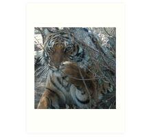 Tiger Play Art Print