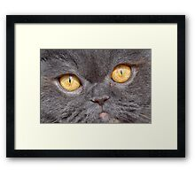I am just a Guest! Framed Print