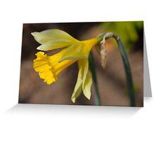 Daffodil - Narcissus jonquilla Greeting Card