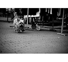 Wandering Yorkie Photographic Print