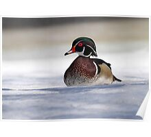 A Duck's Life / Wood Duck Drake Poster