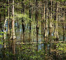 Spring Swamp by Jonicool