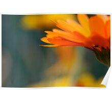 Orange Calendula Poster