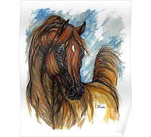 chestnut arabian horse portrait Poster
