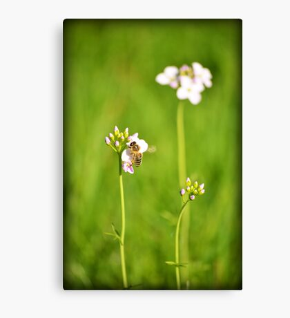 Bee Green Canvas Print